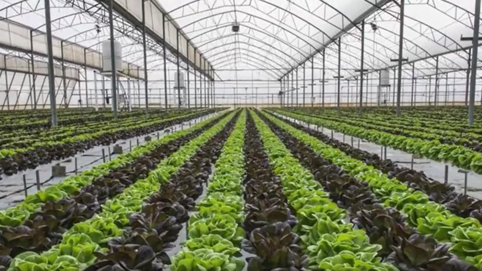 Professional plastic film greenhouse for anti-season vegetable cultivation