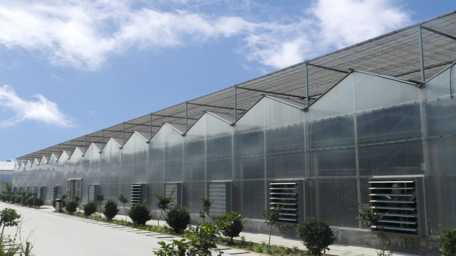 China venlo agriculture multi-span hydroponic PC sheet greenhouse