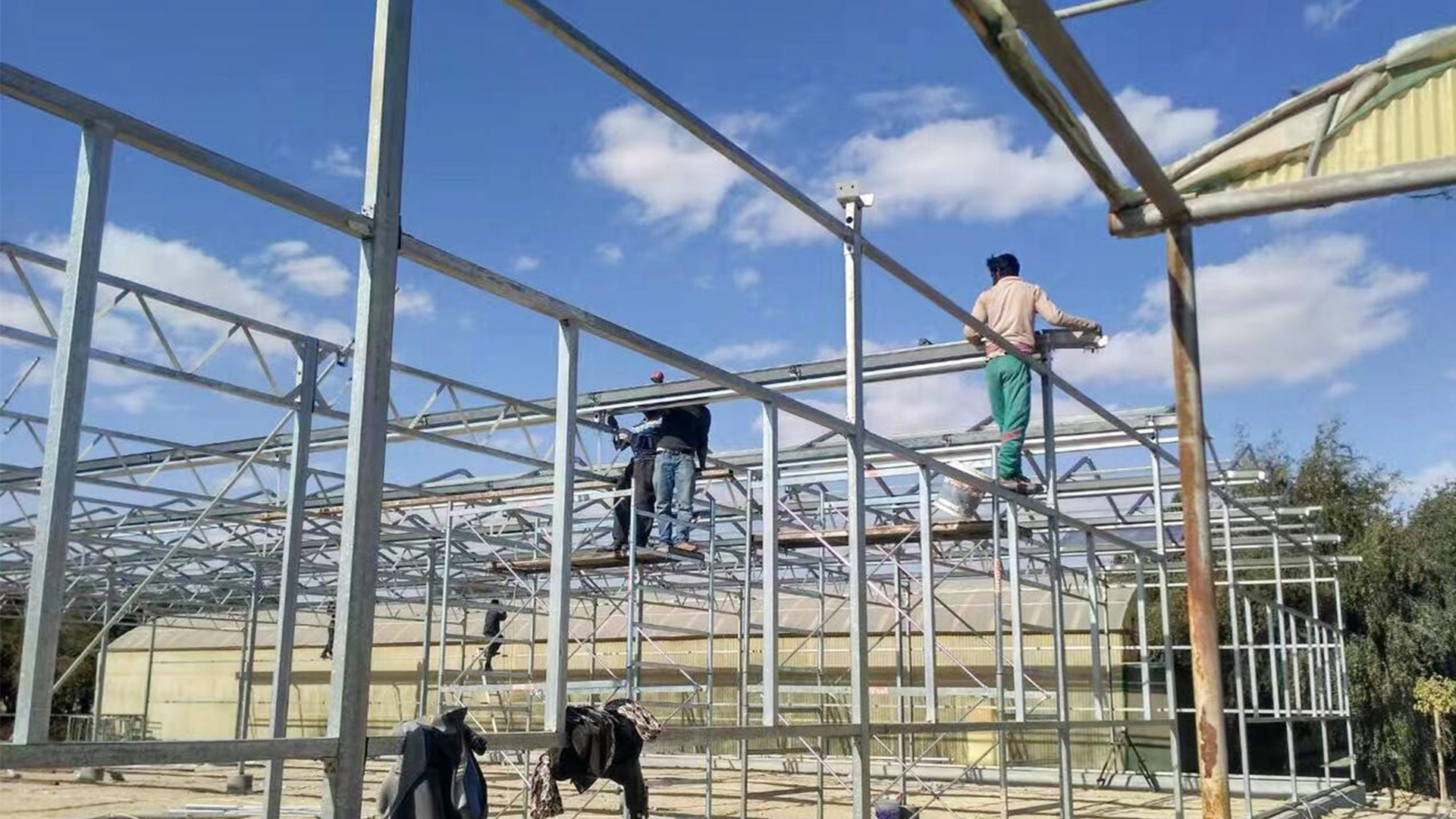 Steel frame agriculture/commercial multi-span PC greenhouse for tomato planting