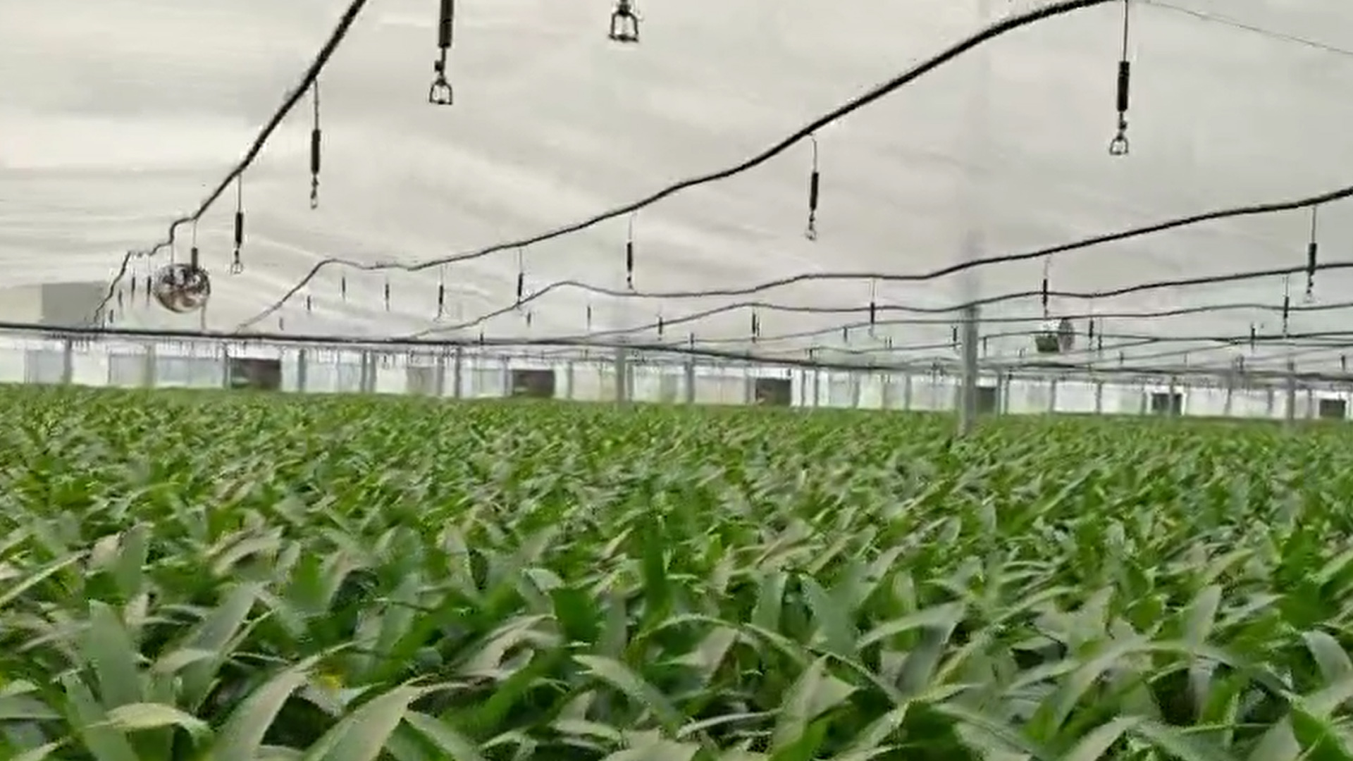 Best Glass Greenhouse FactoryPrice-Shengqiang Greenhouse