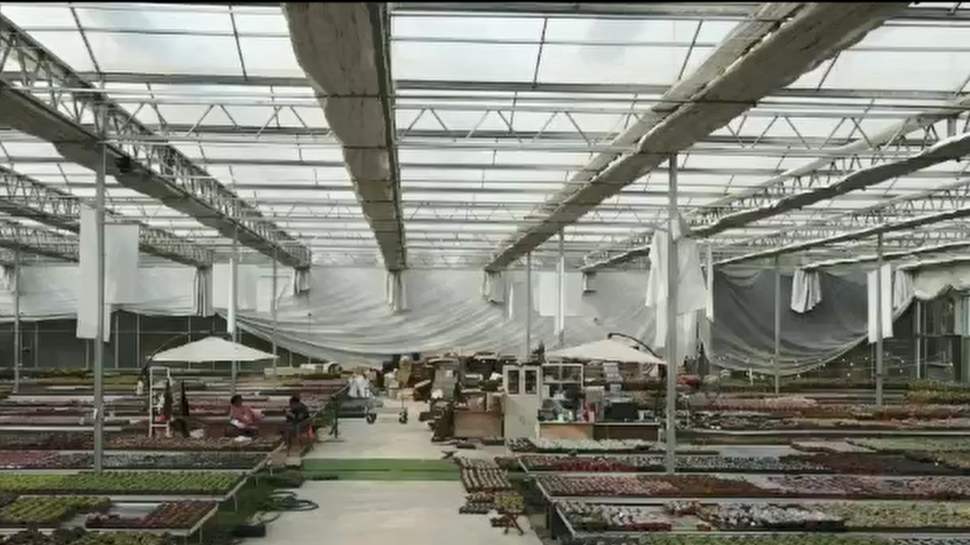 Professional Polycarbonate Sheet Greenhouse manufacturers