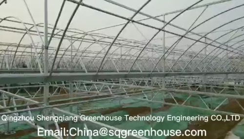 Best Plastic Film Greenhouse Supplier