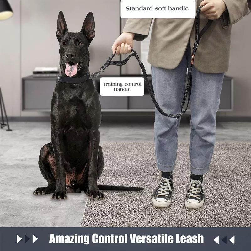 custom dog leash real show