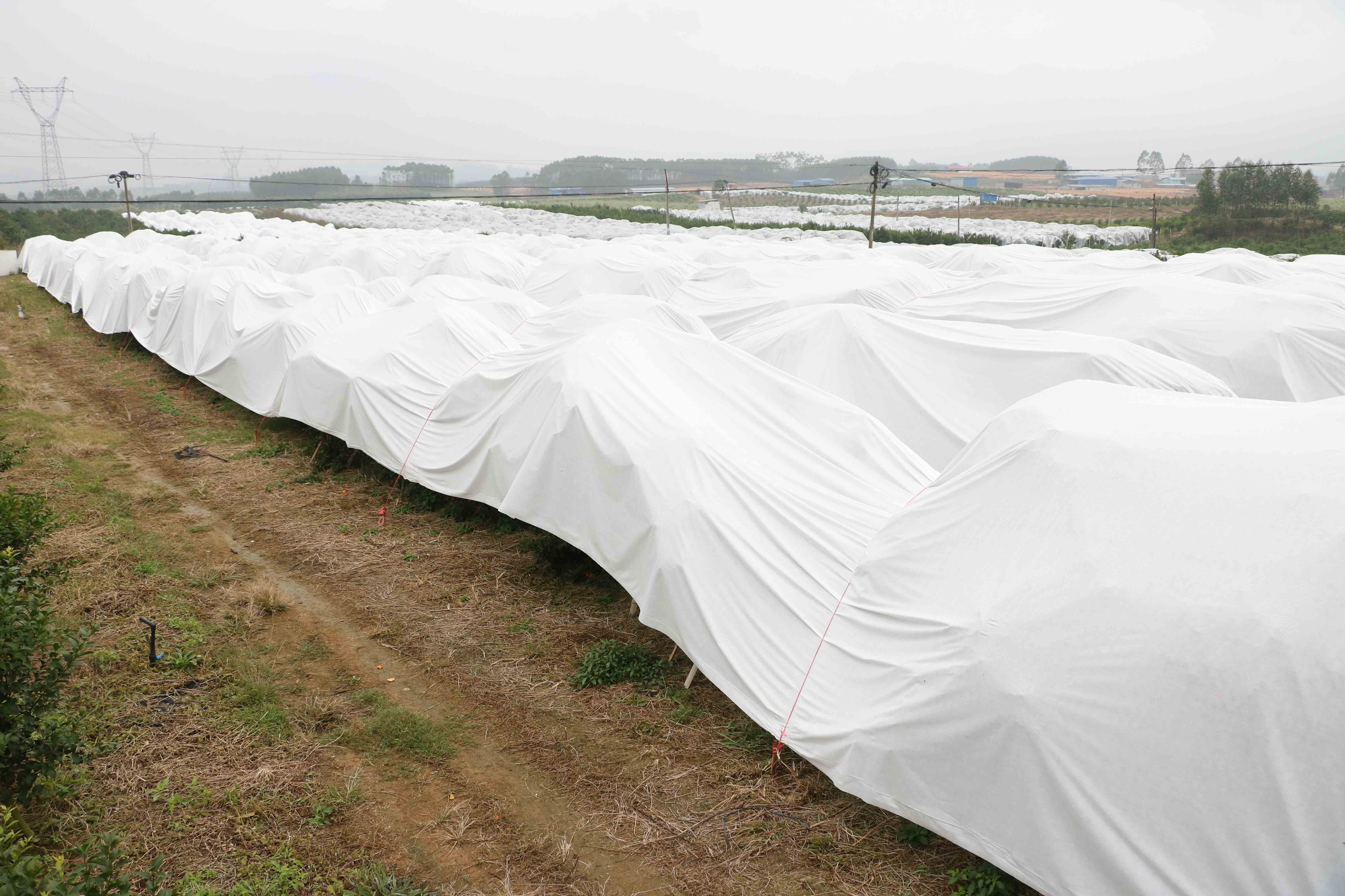 non woven floating row cover