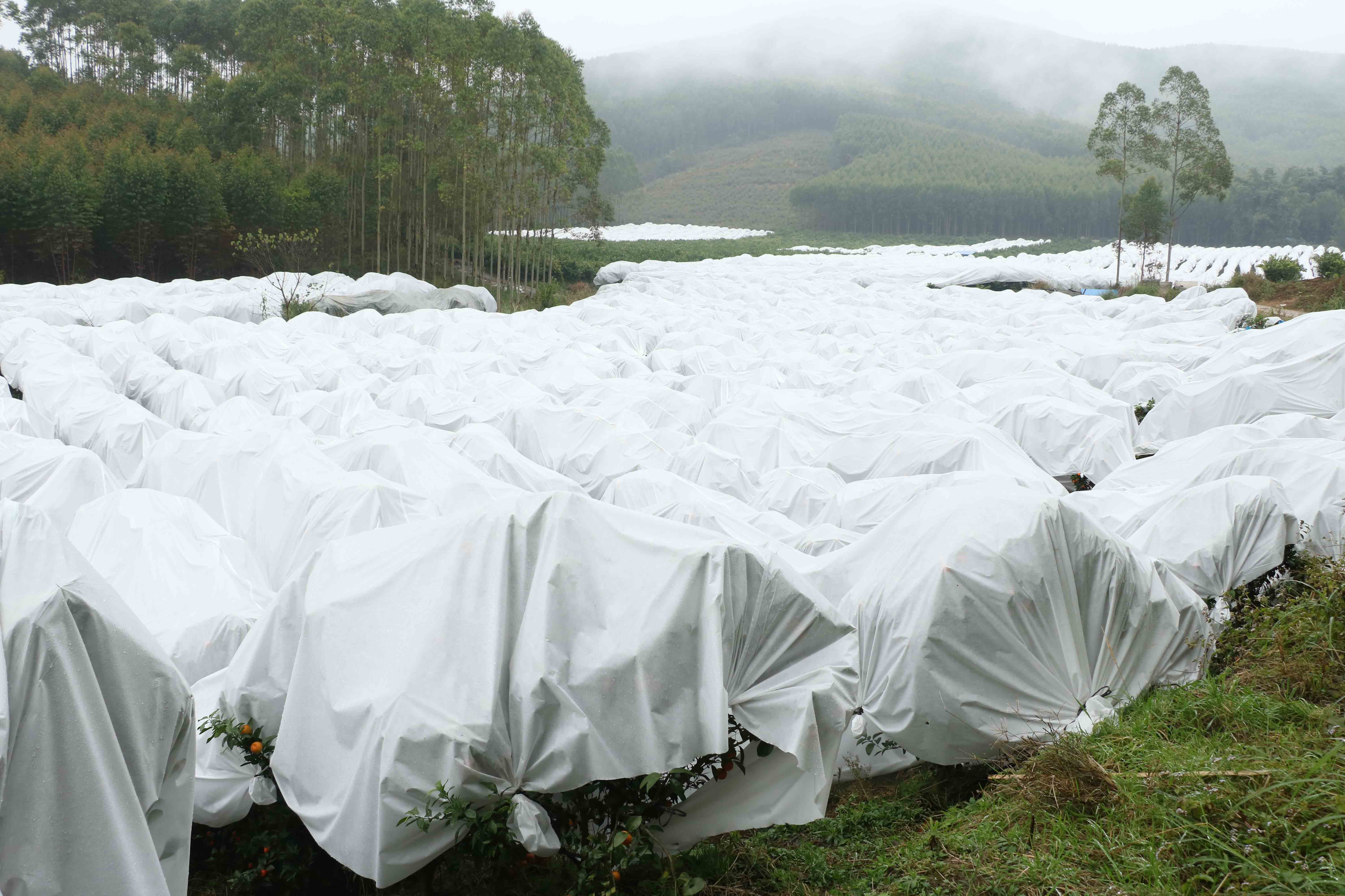 floating row covers for pest control